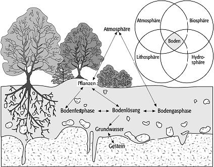 Boden geolexikon for Boden zusammensetzung
